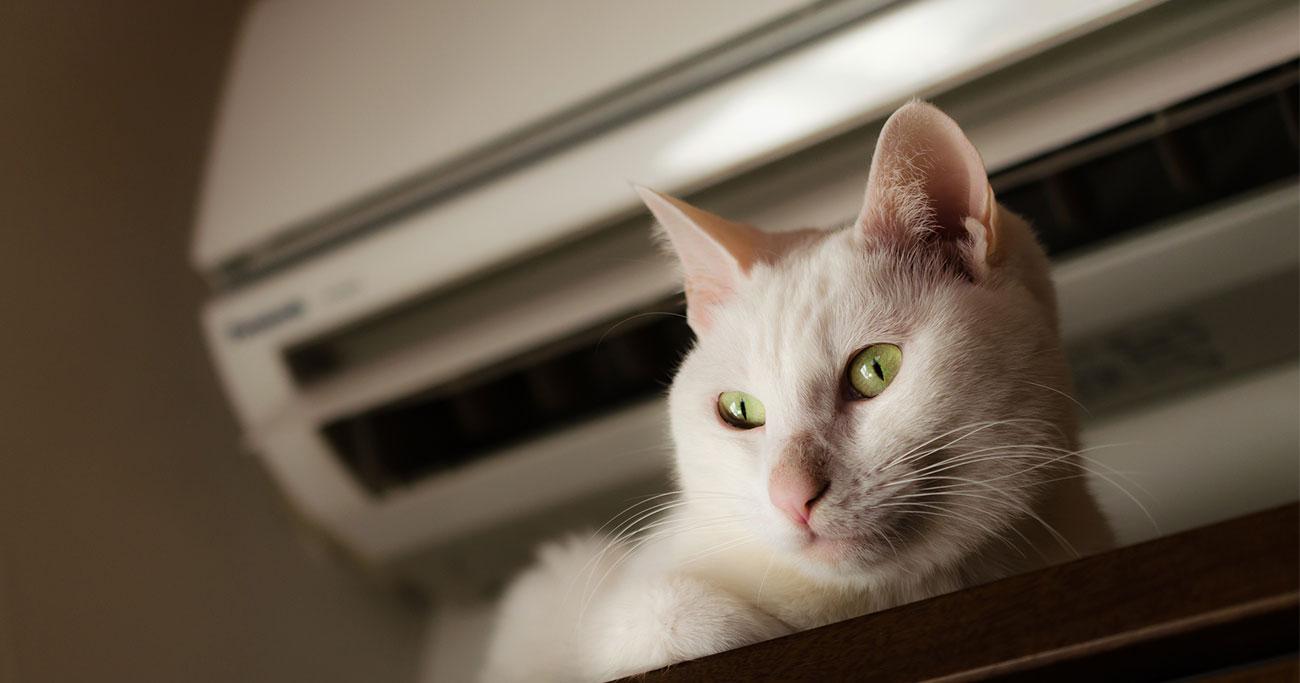 外出中のエアコン付けっぱなしは常識になったのか