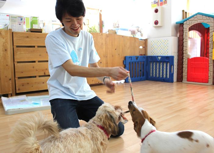 ペットの飼育を助ける保険登場、安価な一時預かり機能も