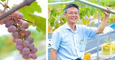 スマート農業への挑戦 その1世界のどこにもない醸造用ぶどうの栽培法の確立を目指す