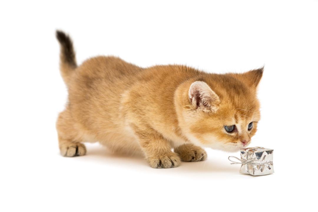 猫は常に○○を使って危険を避ける。あなたもそれを使えば、「しまった!」と後悔することがなくなるはず。<br />全仏ベストセラーの猫本が教える、幸せに生きるヒント<br />