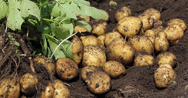 オーガニック野菜に抵抗していた私が、田舎に住んで、自分で作って初めてわかったこと