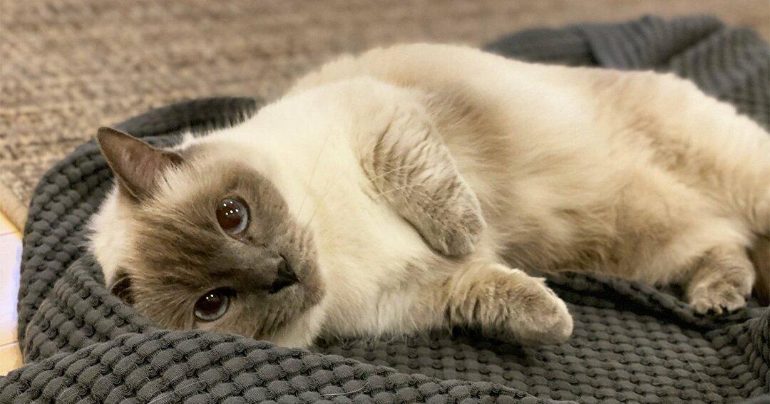 「ネコ活」のススメ、猫に癒される暮らしを始めるための基礎知識