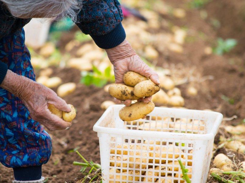 日本の農業は「65歳以上が7割」、労働者不足を救うたった1つの方法とは?