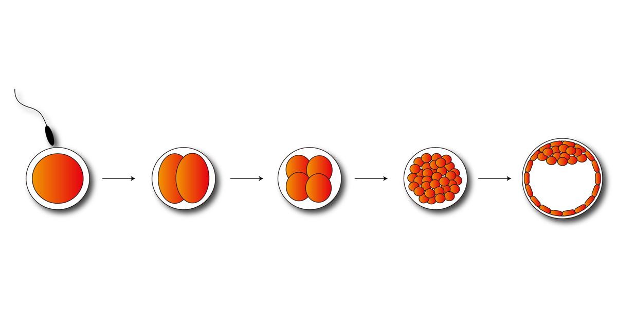 """出産前の受精卵で遺伝子を自在に操作する""""デザイナーベイビー""""をあなたはどう思う?"""