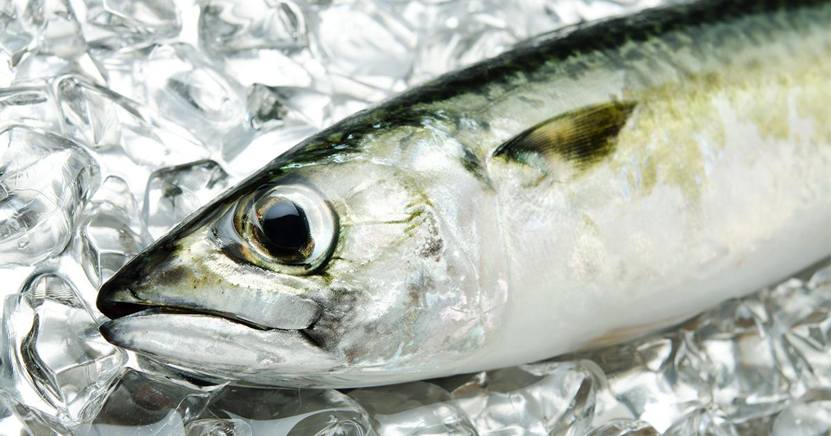 食べるだけで女子力もテンションもアップ! ?地味な魚・サバの伝道師「サバジェンヌ」の正体