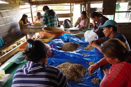 フィリピンのコーヒー農家