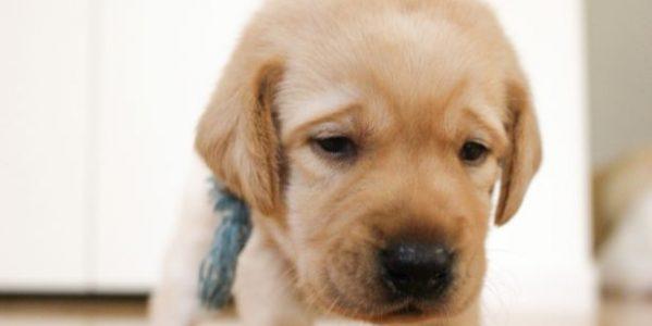 残念な顔をした子犬