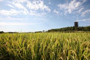 「そうじゃのお米」がもらえる「岡山県総社市」