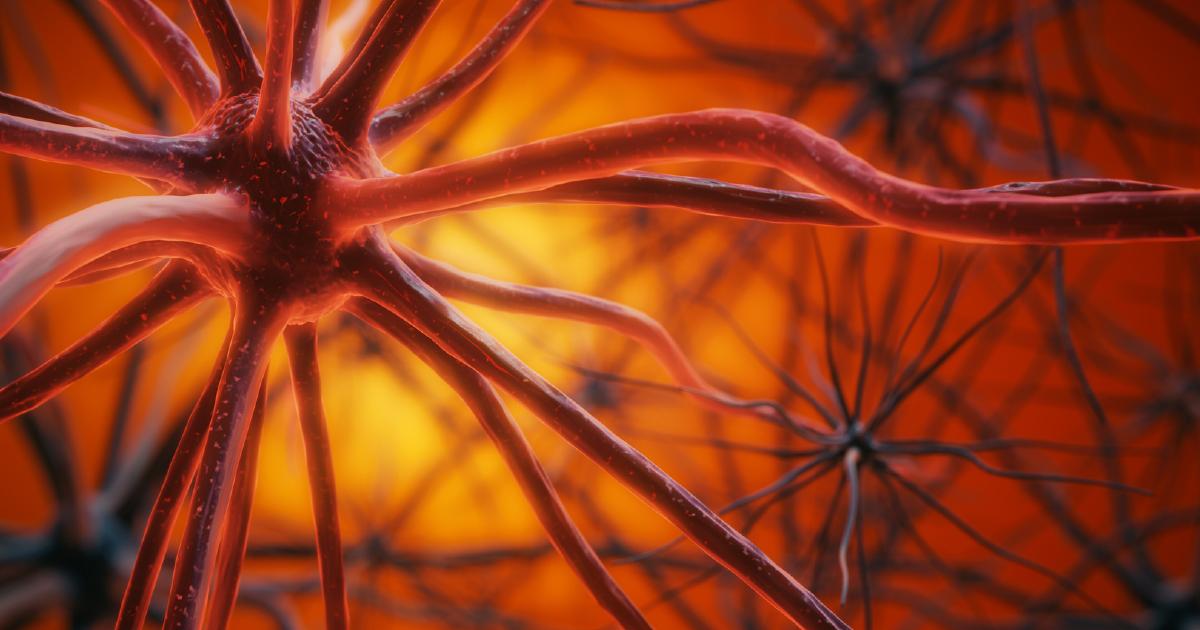 記憶、感情調整、メタ認知…8つの脳部位を変える習慣