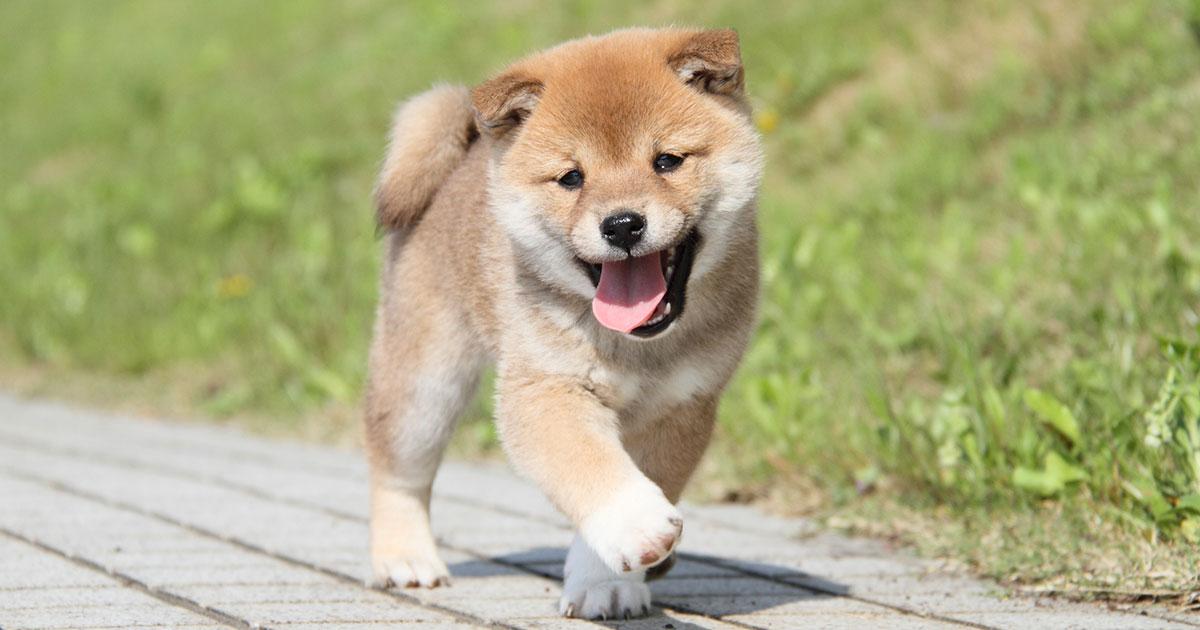 犬を飼う人は長生きする!「トイ」より「猟犬タイプ」がおすすめ ...