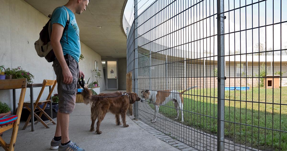 ドイツの動物保護施設は1000も!