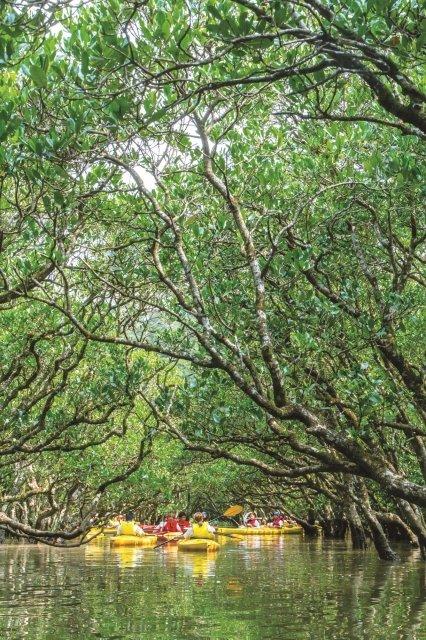 住用川と役勝川の合流する河口に広がる原生林