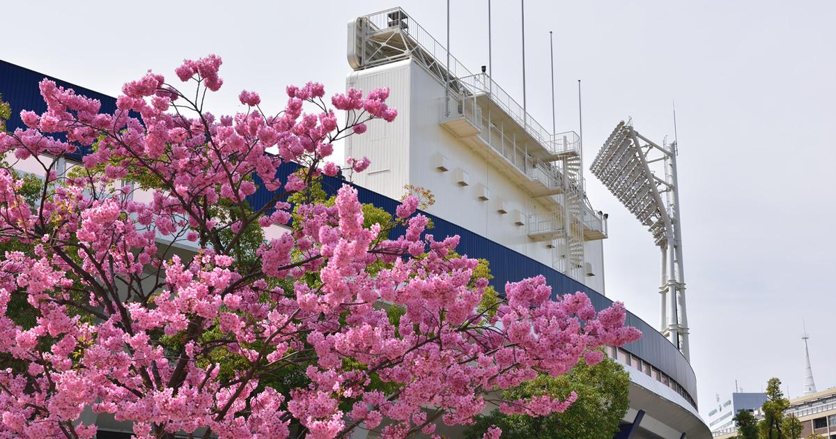 横浜DeNAに学ぶ「極上のおもてなし」戦略最下位争いの常連からなぜ超人気球団に?
