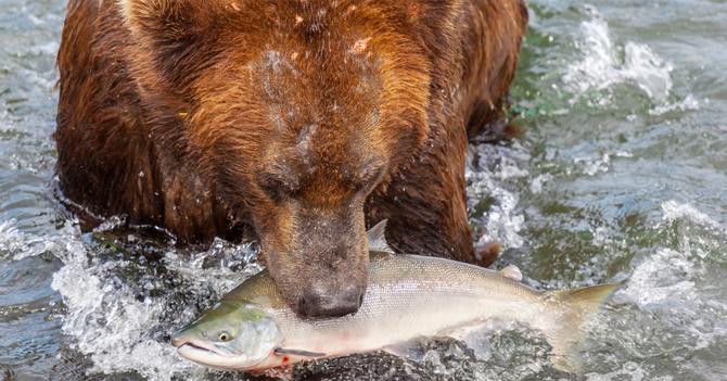 クマに襲われた人たちのリアルに怖い体験談