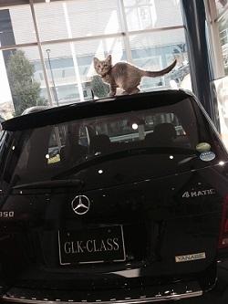 本田美奈子さんの最後の舞台写真を撮影した<br />原田京子さんによる「犬と猫」の里親探し写真展