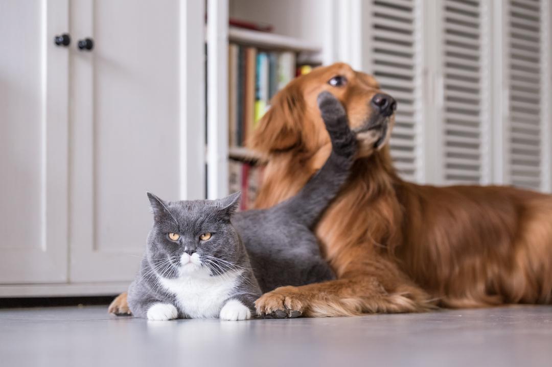 猫は誰になつくかを確実に選んでいる。その具体的な見極め方とは?<br />全仏ベストセラーの猫本が教える、幸せに生きるヒント<br />
