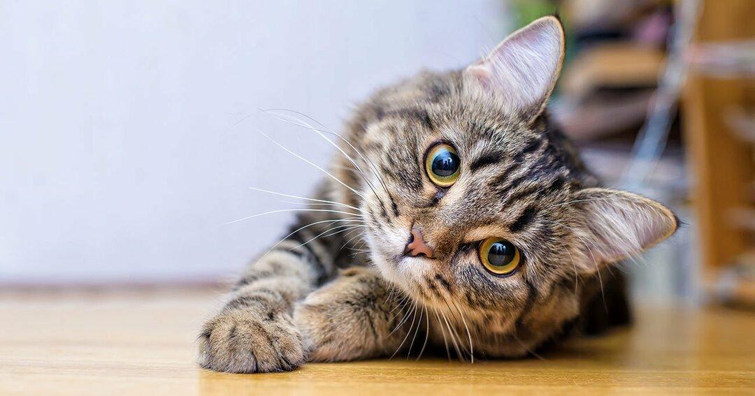 猫から飼い主に覚えておいてほしいこと。<br />猫はこんな人間が苦手です…