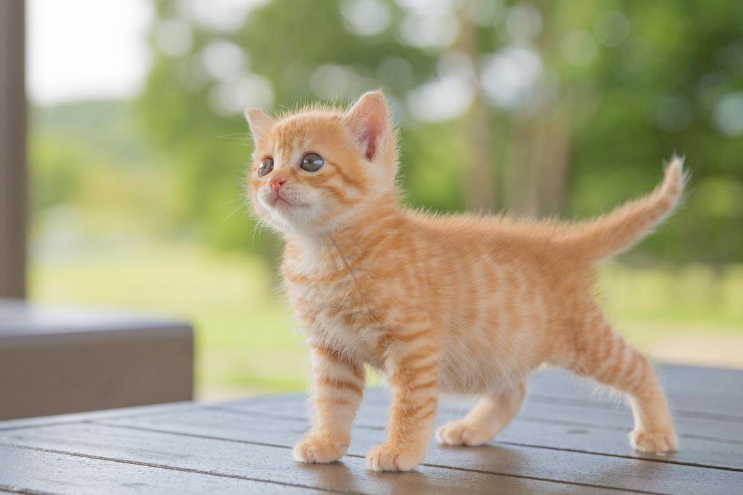 フランスでベストセラー! 世界22ヵ国で翻訳!<br />欲しいものがある時には、猫のように○○すれば確実に手に入る!<br />