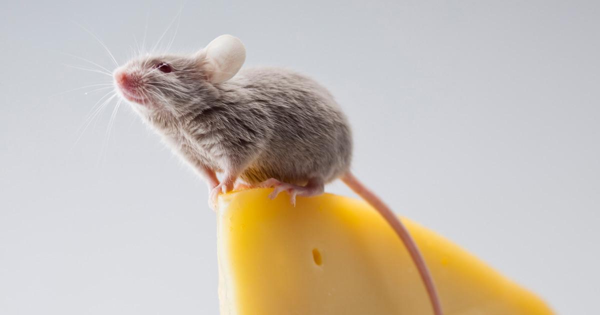 鼻からゴキブリ、洋服からネズミ…生物をナメてはいけない