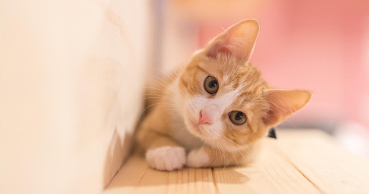 """「猫がかわいそうだから工事やめろ」常識はずれなクレーム2選と駆逐策の""""リーサル・ウェポン"""""""