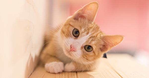 猫の画像 p1_22