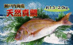 【朝獲れ直送便】瀬戸内海産の天然鯛を丸ごと1匹 大サイズ