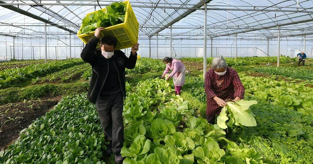 浙江省の農場