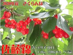 2020年産 山形県河北町産さくらんぼ(佐藤錦)1kgバラ詰