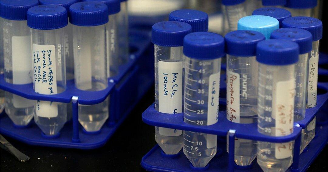 新型コロナウイルス,免疫