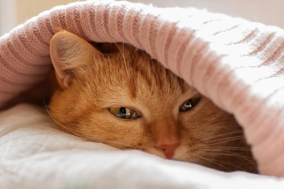 フランスでベストセラー! 世界22ヵ国で翻訳!<br />猫がよく○○しているのは、ストレスを上手くやり過ごすためだった!<br />