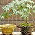 海外の「盆栽ブーム」で盆栽鉢まで大人気に!日本人が忘れかけた「TOKONAME」の魅力