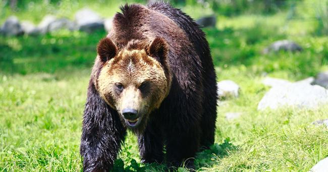 クマ遭遇事故を自己責任で済ませてはいけない理由