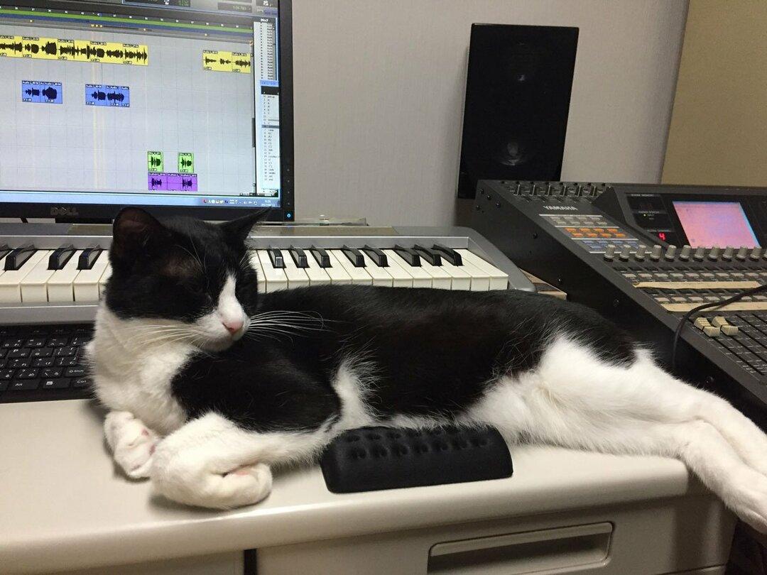 筆者の愛猫。作業中、存在感を示そうとマウスパッドを封鎖する