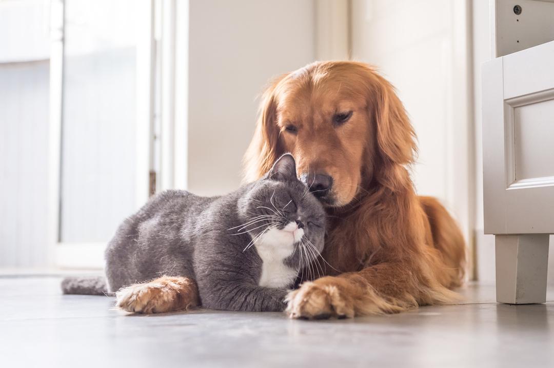 フランスでベストセラー!世界22ヵ国で翻訳!<br />猫と人間に共通する、生きるのに絶対必要なものとは?<br />