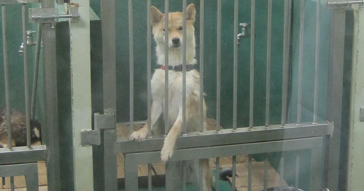 「犬の殺処分ゼロ」を神奈川県が3年連続達成できた理由